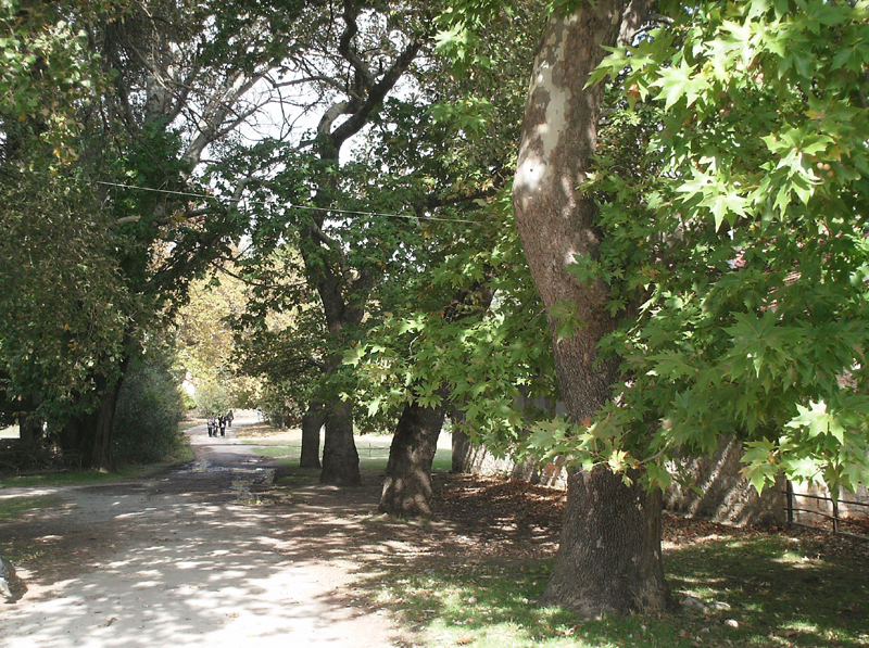 Βόλτα στο πανέμορφο βασιλικό κτήμα στο Τατόι | in.gr