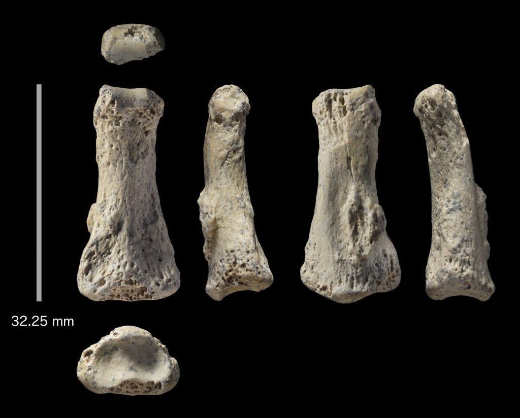 Ανακαλύφθηκε απολίθωμα του Homo sapiens ηλικίας 90.000 ετών στη Σ.Αραβία