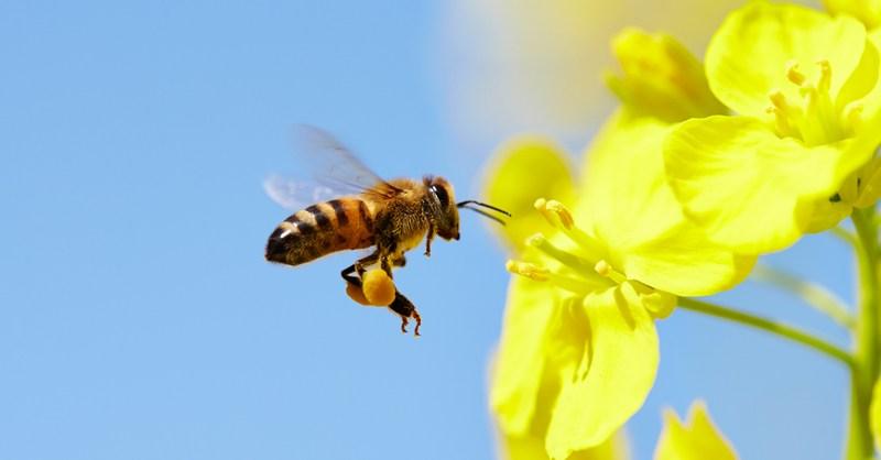 Οι μέλισσες μπορούν να κατανοήσουν το μηδέν