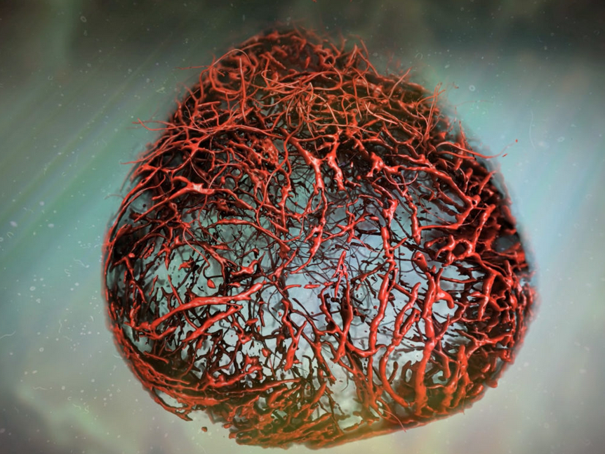 Ερευνητές κατόρθωσαν να δημιουργήσουν πρώτη φορά εργαστηριακά αιμοφόρα αγγεία | in.gr