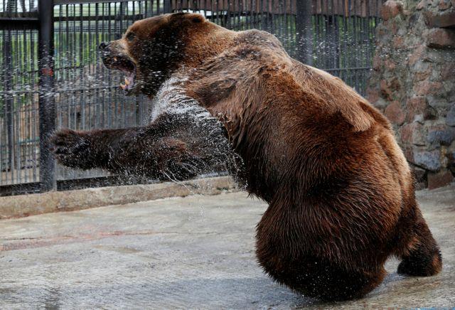 Αρκούδα κρατούσε άνδρα για 30 μέρες στην φωλιά της: Σοκαριστική η εικόνα του! (Φωτό–Βίντεο)
