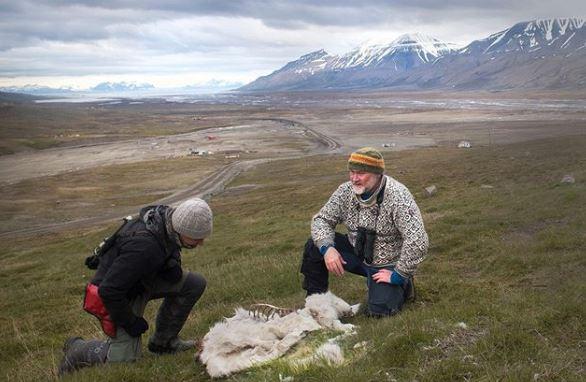 Αρκτική: 200 τάρανδοι βρέθηκαν νεκροί από την πείνα
