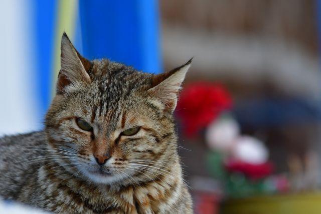 Ποινή φυλάκισης και βαρύ πρόστιμο σε Λυκειάρχη που πυροβόλησε αδέσποτη γάτα | in.gr