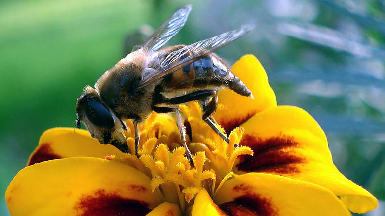 «Μελισσοκόμος» πέθανε από τσίμπημα μέλισσας στην Ορεστιάδα