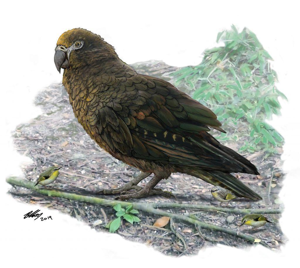 «Ηρακλής ο Απρόσμενος»: Ανακαλύφθηκε το απολίθωμα του μεγαλύτερου παπαγάλου