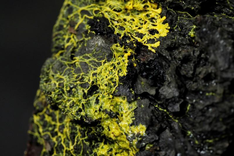 Blob: Ο νέος οργανισμός που μοιάζει με μύκητα αλλά συμπεριφέρεται σαν ζώο