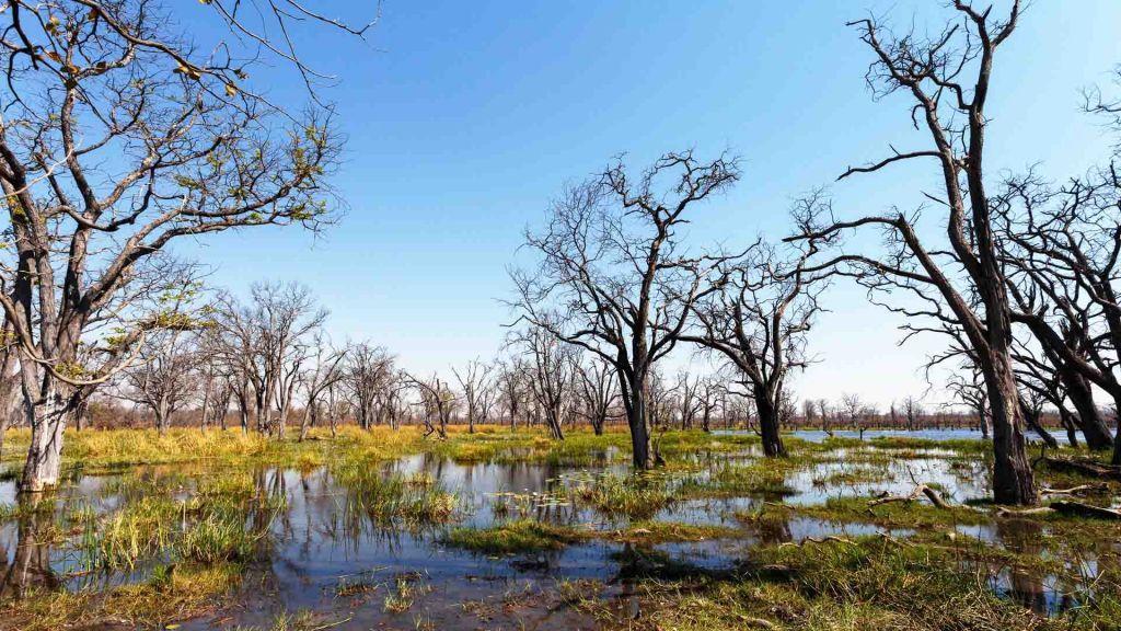 Νέα επιστημονική έρευνα : Όλοι καταγόμαστε από την Μποτσουάνα