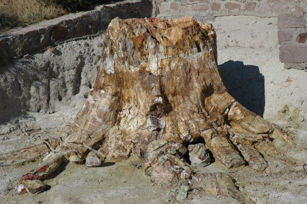 Σίγρι Λέσβου : Η γεωλογική ιστορία της λεκάνης του Αιγαίου | in.gr