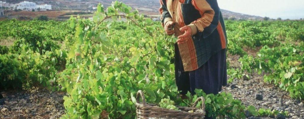 Ηρθε η ώρα για τους έλληνες αγρότες να πάρουν κρίσιμες αποφάσεις