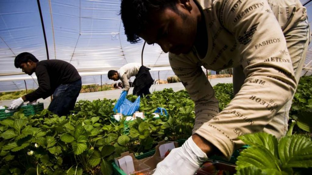 ΟΑΕΔ... μεταναστών» : Το σχέδιο για αγροτικές δουλειές σε χιλιάδες ...