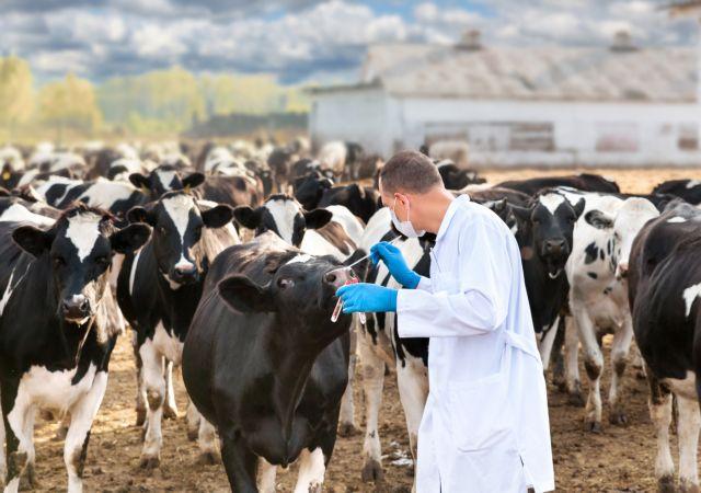 Κοροναϊός: Οι βασικοί άξονες για την ενίσχυση των κτηνοτρόφων
