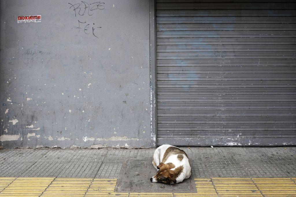 Κοροναϊός : Νέες δράσεις στήριξης των ευάλωτων ομάδων και ζώων | in.gr