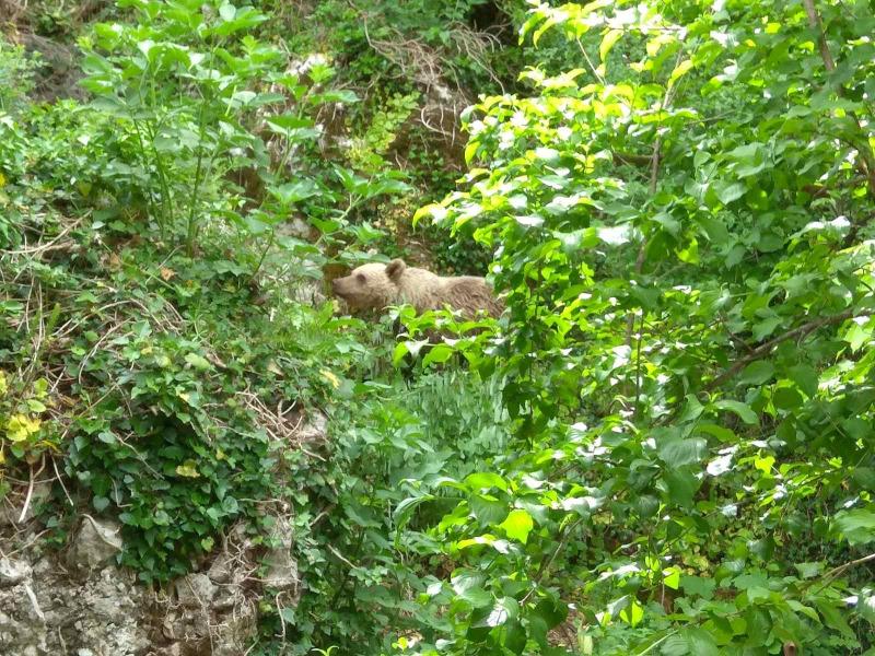 Σπάνιο: Αρκουδάκι «επισκέπτεται» τους κατοίκους στο Μικρό Πάπιγκο | in.gr