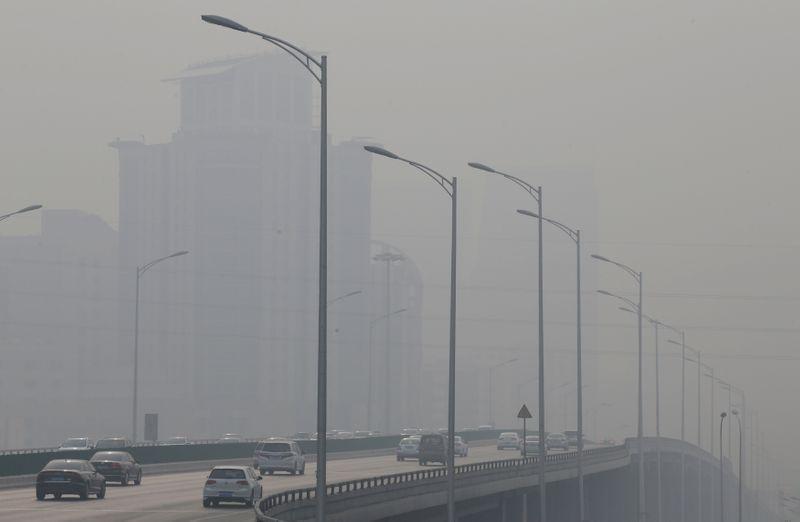 Αστικά κέντρα : Τα πλέον αποδοτικά φυτά στη μάχη κατά της ατμοσφαιρικής ρύπανσης