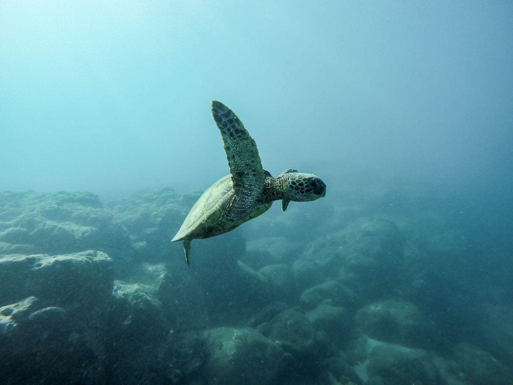 Κλιματική αλλαγή : Έως και επτά φορές ταχύτερα θα επηρεάζονται οι ωκεανοί μέχρι το 2050