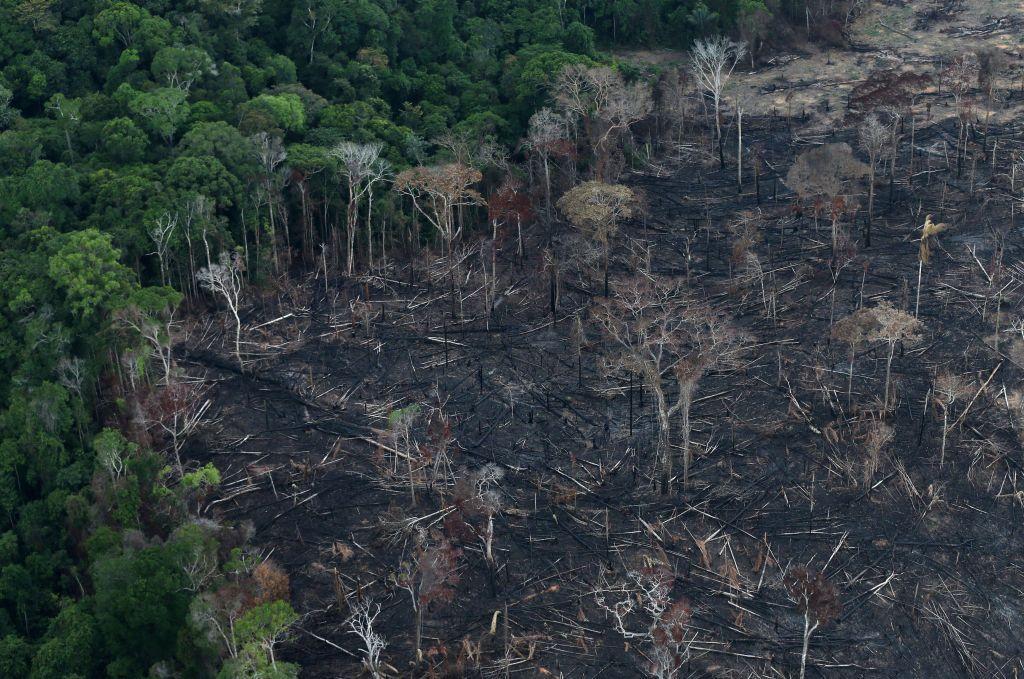 ΟΗΕ και ΠΟΥ : Οι πανδημίες είναι αποτέλεσμα της καταστροφής της φύσης