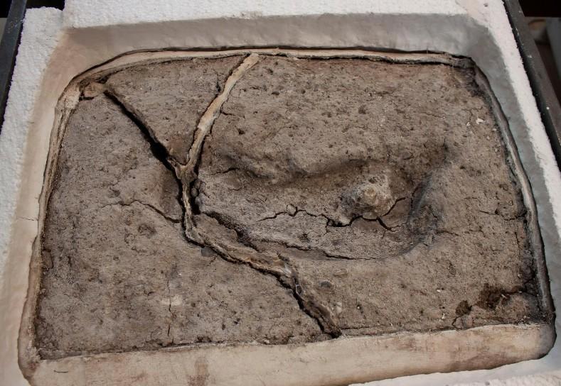 Σ. Αραβία : Ανακαλύφθηκαν πατημασιές από Homo Sapiens ηλικίας 120.000 ετών