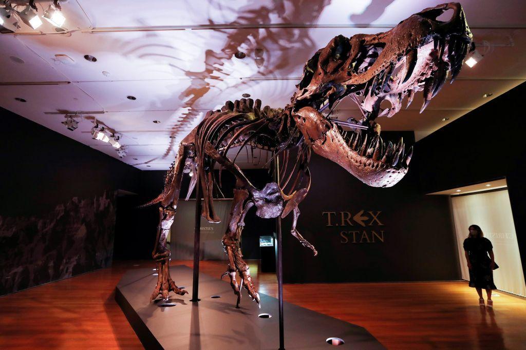 Στο σφυρί ο τεράστιος τυραννόσαυρος «STAN» ηλικίας 67 εκατομμυρίων ετών