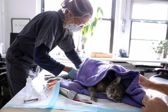 Νέα μελέτη ανατρέπει τα δεδομένα: Οι άνθρωποι μεταδίδουν τον κοροναϊό στις γάτες και τους σκύλους