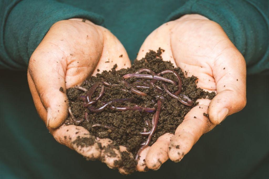 Μπορούν τα… σκουλήκια να δώσουν λύση στην πλαστική ρύπανση;