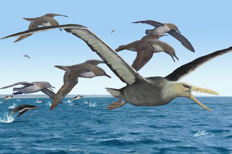 Πελαγόρνιθες: Πτηνά σε μέγεθος αεροπλάνου διαδέχτηκαν τους δεινοσαύρους