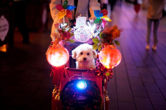 Κίνα : Μέτρο για απαγόρευση της βόλτας με σκυλιά – Θανάτωση μετά την τρίτη παραβίαση