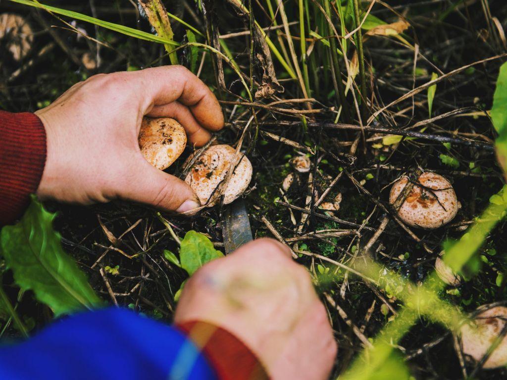 Εύβοια : Χάθηκαν ενώ έψαχναν για μανιτάρια