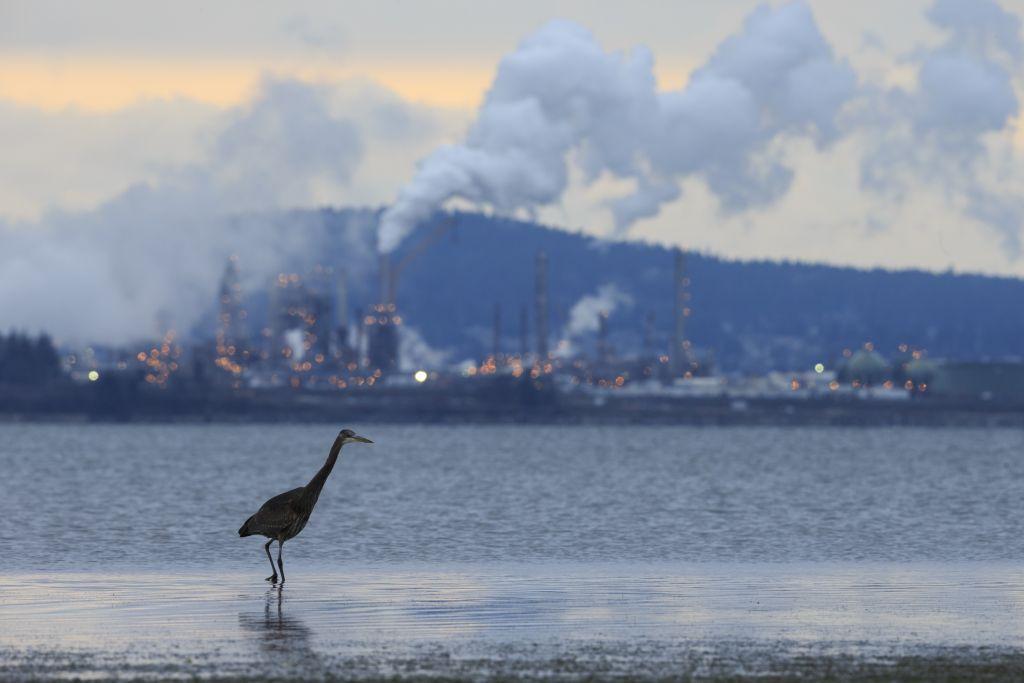 «Δισεκατομμύρια πτηνά» σώζονται χάρη στη μείωση της ατμοσφαιρικής ρύπανσης