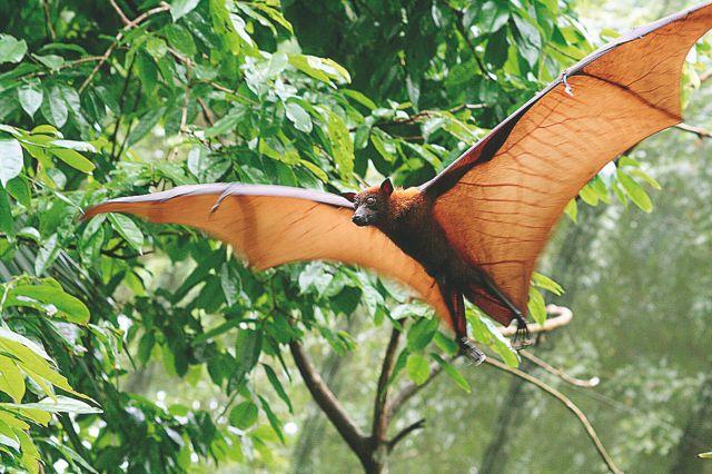 Κοροναϊός : Βρήκαν συγγενικούς ιούς σε νυχτερίδες που φυλάσσονταν σε καταψύκτες σε Ιαπωνία και Καμπότζη