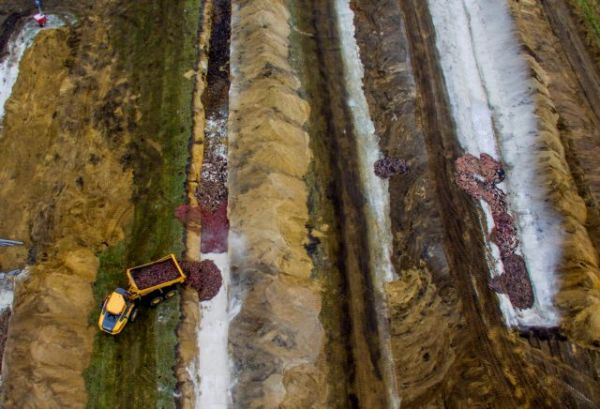 mink2 600x409 - Δανία: Ανησυχία από νεκρά μινκ που ξεπροβάλλουν από τους τάφους τους