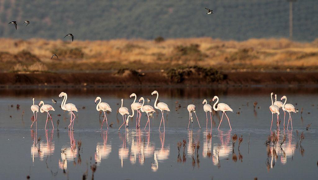 Η Ελλάδα κάτω από τη βάση σε θέματα βιοποικιλότητας