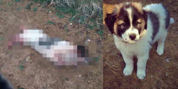 Σουφλί : Επνιξαν και κρέμασαν τον σκύλο στελέχους του δήμου τη μέρα της πρόσληψής του