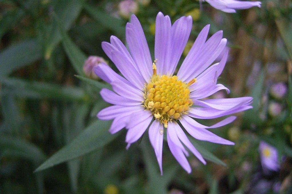 Διαδικτυακό μυστήριο με λουλούδι που δέχεται 90 εκατομμύρια χτυπήματα την ημέρα