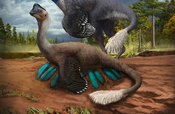 O δεινόσαυρος που κλωσά τα αβγά του εδώ και 70 εκατ. χρόνια | in.gr
