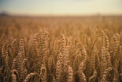 Προ των πυλών μία νέα επισιτιστική κρίση;