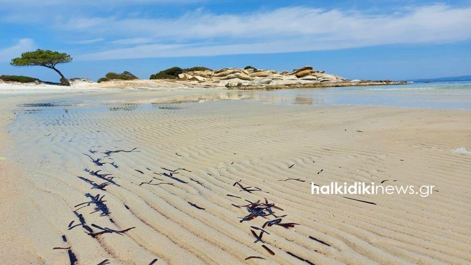 Η Χαλκιδική ξέμεινε… από θάλασσα – Απόκοσμη η εικόνα στο μαγευτικό Καρύδι