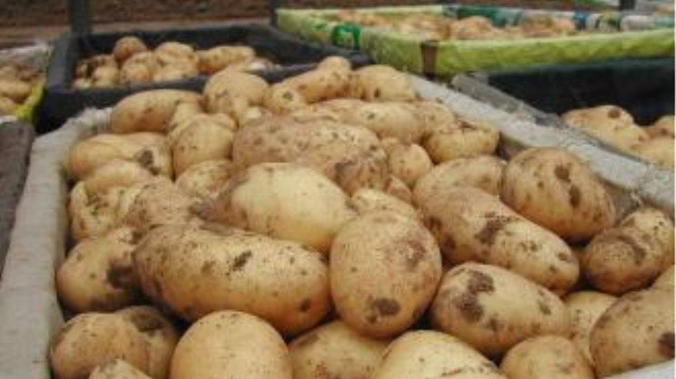 Εντός των ημερών η έγκριση του ΥΠΟΙΚ για την πληρωμή ενίσχυσης για την πατάτα
