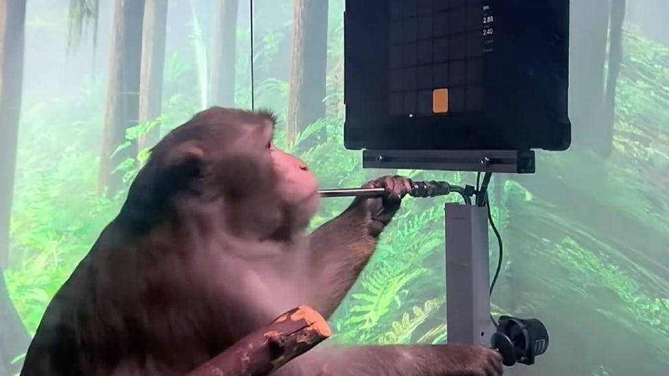 Τεχνολογία του Έλον Μασκ επιτρέπει σε πίθηκο να παίζει βιντεοπαιχνίδια με τη σκέψη
