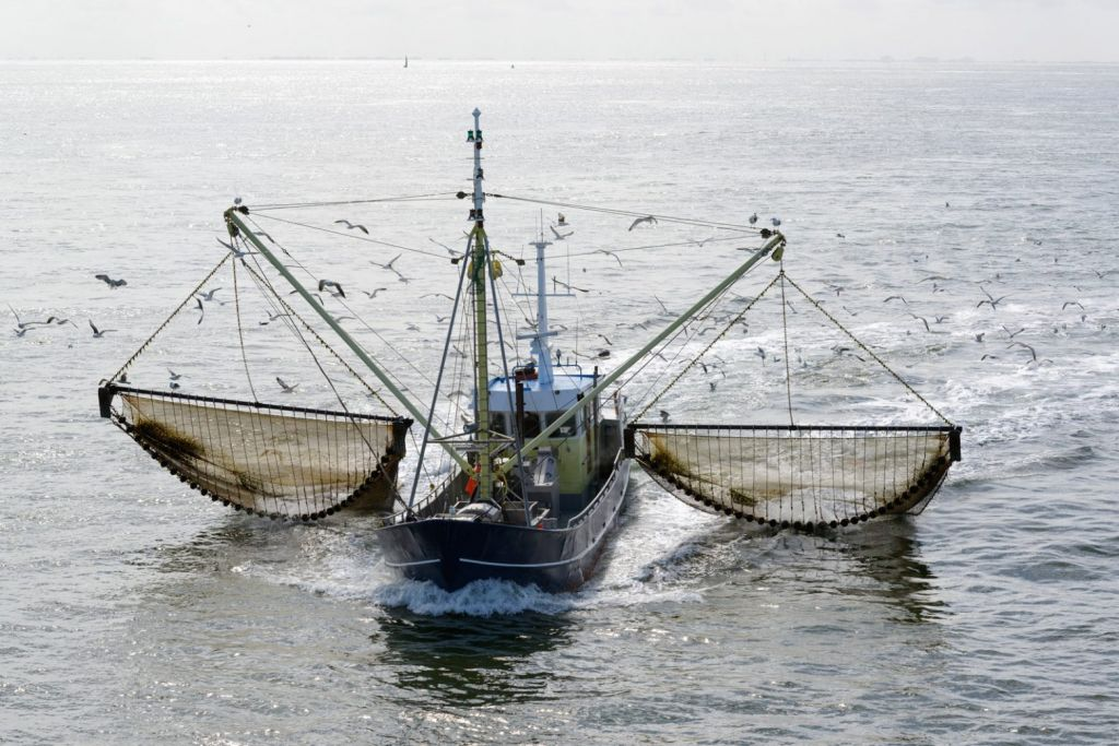 Η ΕΕ απαγορεύει οριστικά την αλιεία με ηλεκτροσόκ