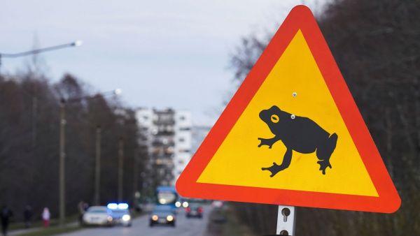Ερωτοχτυπημένα βατράχια αποκτούν προτεραιότητα σε κεντρικό δρόμο της Εσθονίας