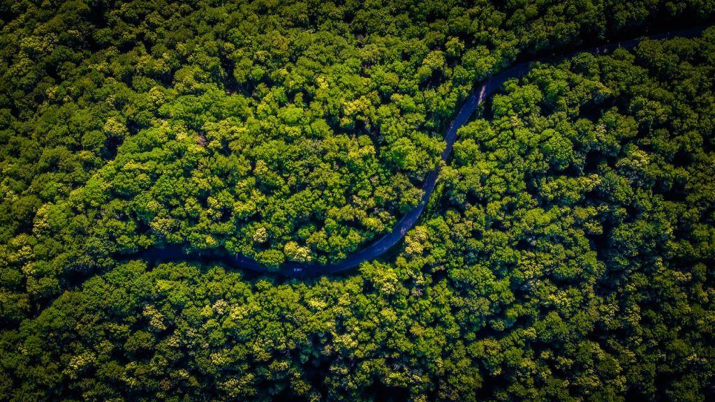 Μόλις το 3% των εδαφών της Γης παραμένει οικολογικά παρθένο – SOS εκπέμπουν οι επιστήμονες