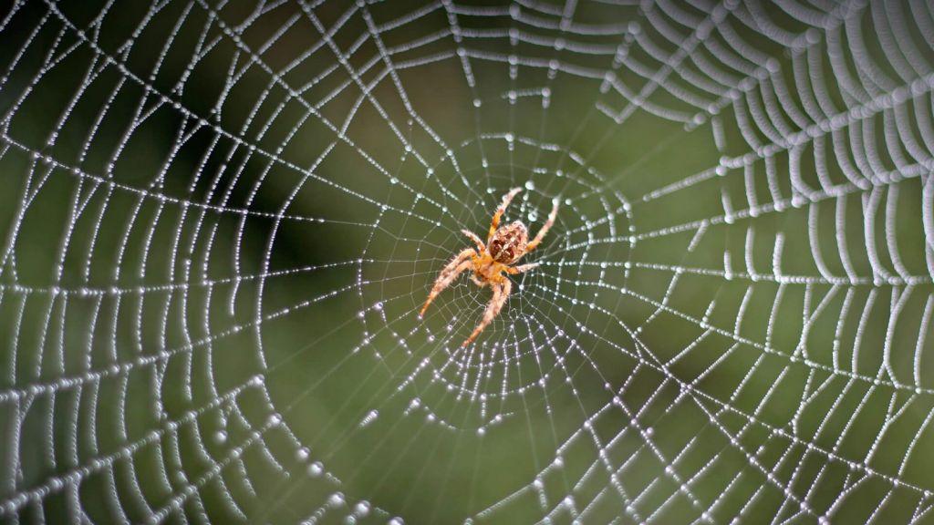 Τεχνητή νοημοσύνη ακούει αράχνες να παίζουν άρπα