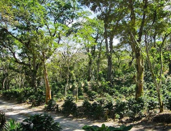 Τρομακτικά στοιχεία: Ο Αμαζόνιος εξέπεμψε περισσότερο διοξείδιο του άνθρακα από όσο απορρόφησε