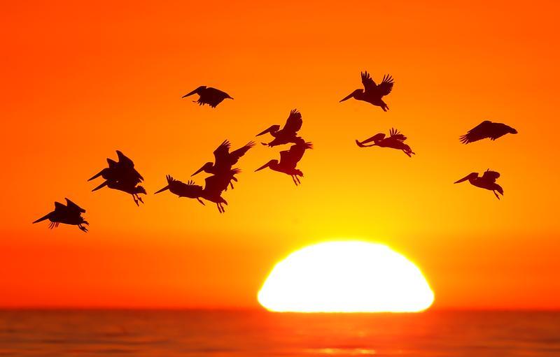 Υπάρχουν περίπου 50 δισ. πτηνά στη Γη – Ποιο είδος είναι το πολυπληθέστερο