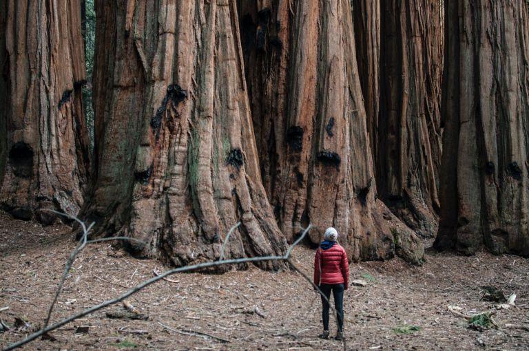 Καλιφόρνια: Μια γιγαντιαία σεκόγια σιγοκαίει ακόμη από τις πυρκαγιές του… 2020