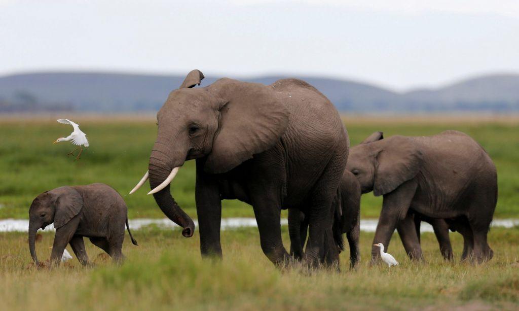 Κίνα: Κοπάδι ελεφάντων σε ανεξήγητη Οδύσσεια 500 χιλιομέτρων