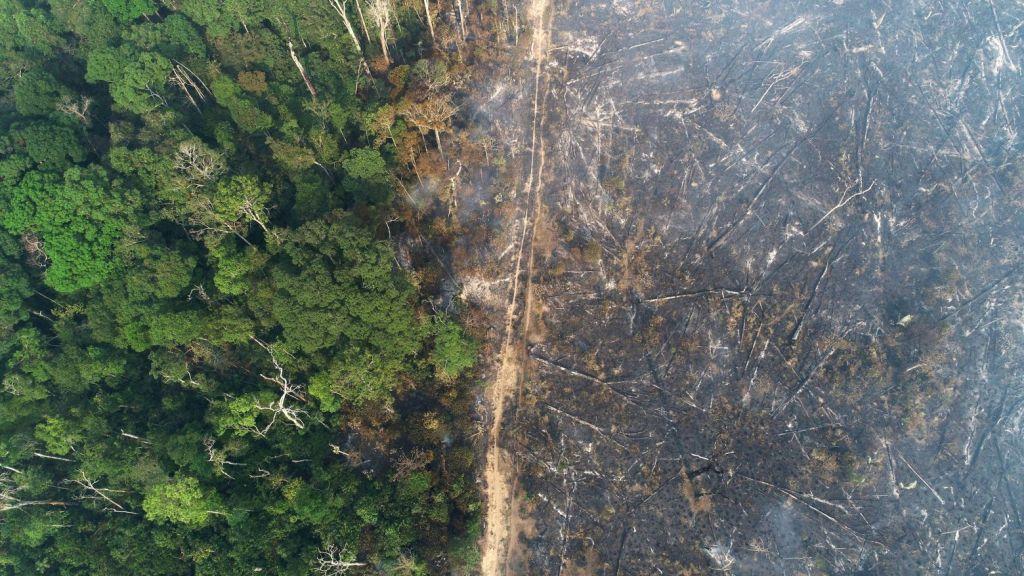 ΟΗΕ: Για τη σωτηρία του πλανήτη απαιτείται αποκατάσταση εκτάσεων στο μέγεθος της Κίνας