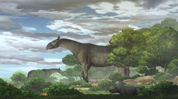 Προϊστορικός ρινόκερος ήταν βαρύτερος από ελέφαντα, ψηλότερος από καμηλοπάρδαλη