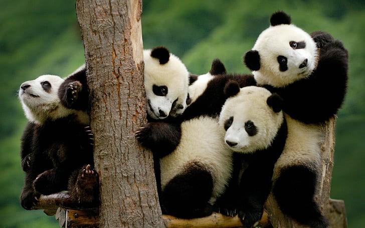 Τα πάντα, παντοτινά: Εκτός της λίστας των απειλούμενων ειδών η εθνική μασκότ της Κίνας