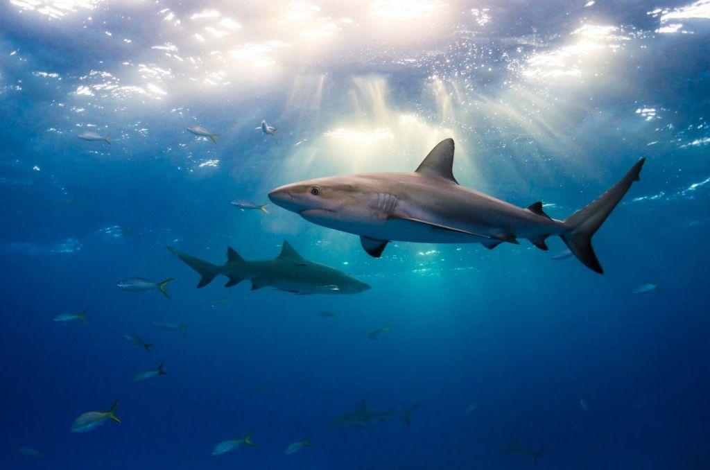 Καρχαρίες με βαρέα μέταλλα βαφτίζονται «γαλέοι» και «ξιφίες» στην Ελλάδα